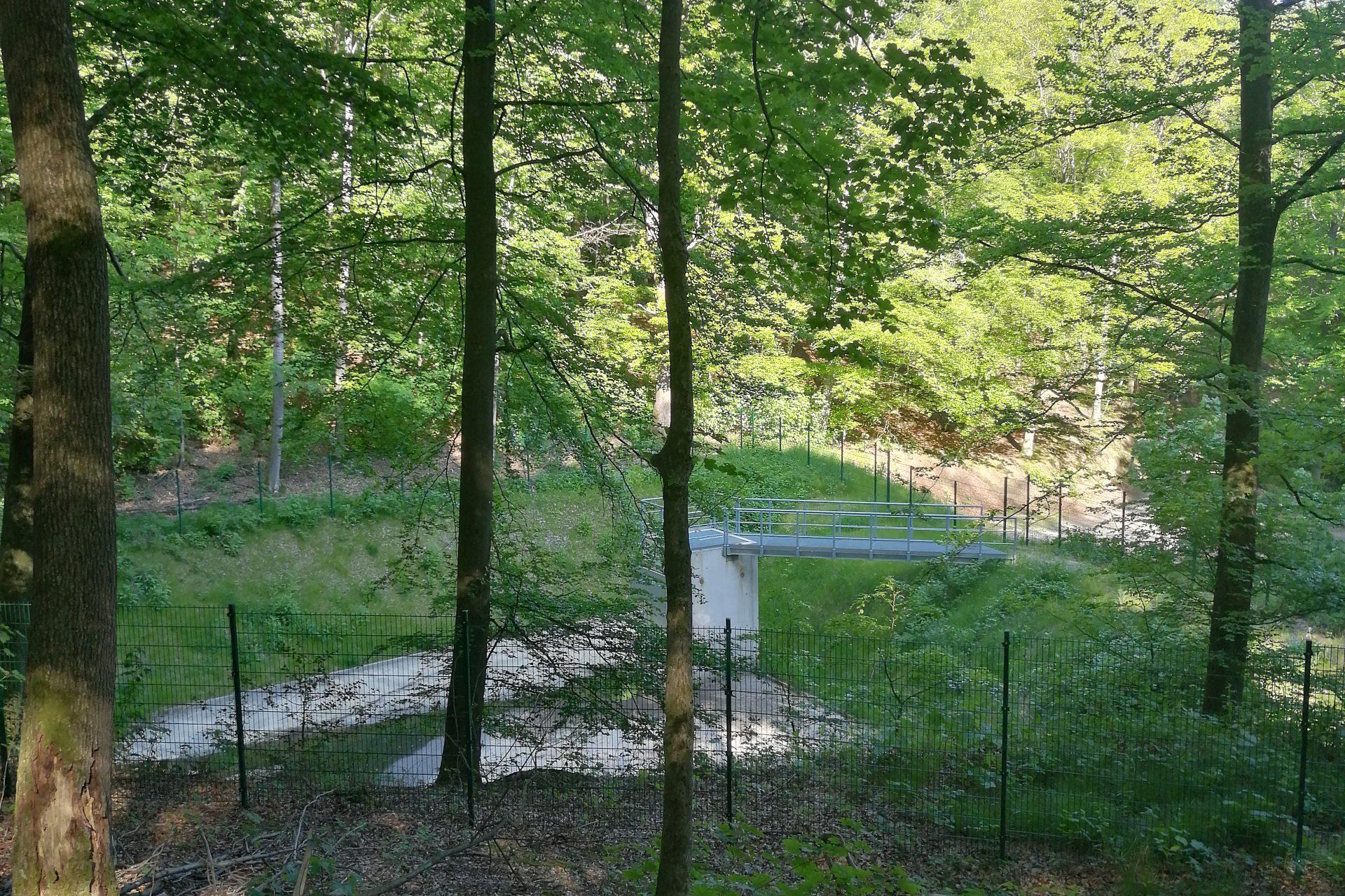 Verpachtung städtischer Waldflächen zur Jagdausübung